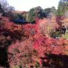 紅葉が色づく秋。東福寺に行ってきました。